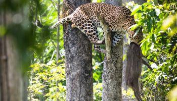 กรมอุทยานแห่งชาติฯ จับมือเครือเจริญโภคภัณฑ์และบริษัทในเครือ มุ่งมั่นเดินหน้าปลูกจิตสำนึกเยาวชนและคนไทยทั้งประเทศ ร่วมสร้างแรงบันดาลใจอนุรักษ์สัตว์ป่าและป่าไม้ ผ่านการประกวดภาพถ่าย สัตว์มีค่า ป่ามีคุณ ต่อเนื่องเป็นปีที่ 27