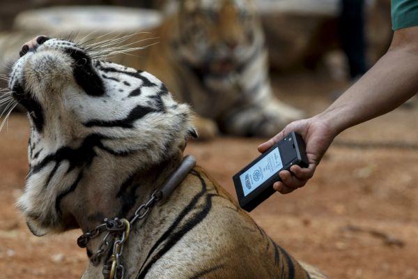 Thai chip designer ดังไกล เชื่อมต่อ 5G ใช้ติดตามสัตว์และรถยนต์ไร้คนขับ เตรียมขายหุ้น IPO มุ่งหน้าผู้ผลิตไมโครชิพสัตว์อันดับ 1 ของโลก